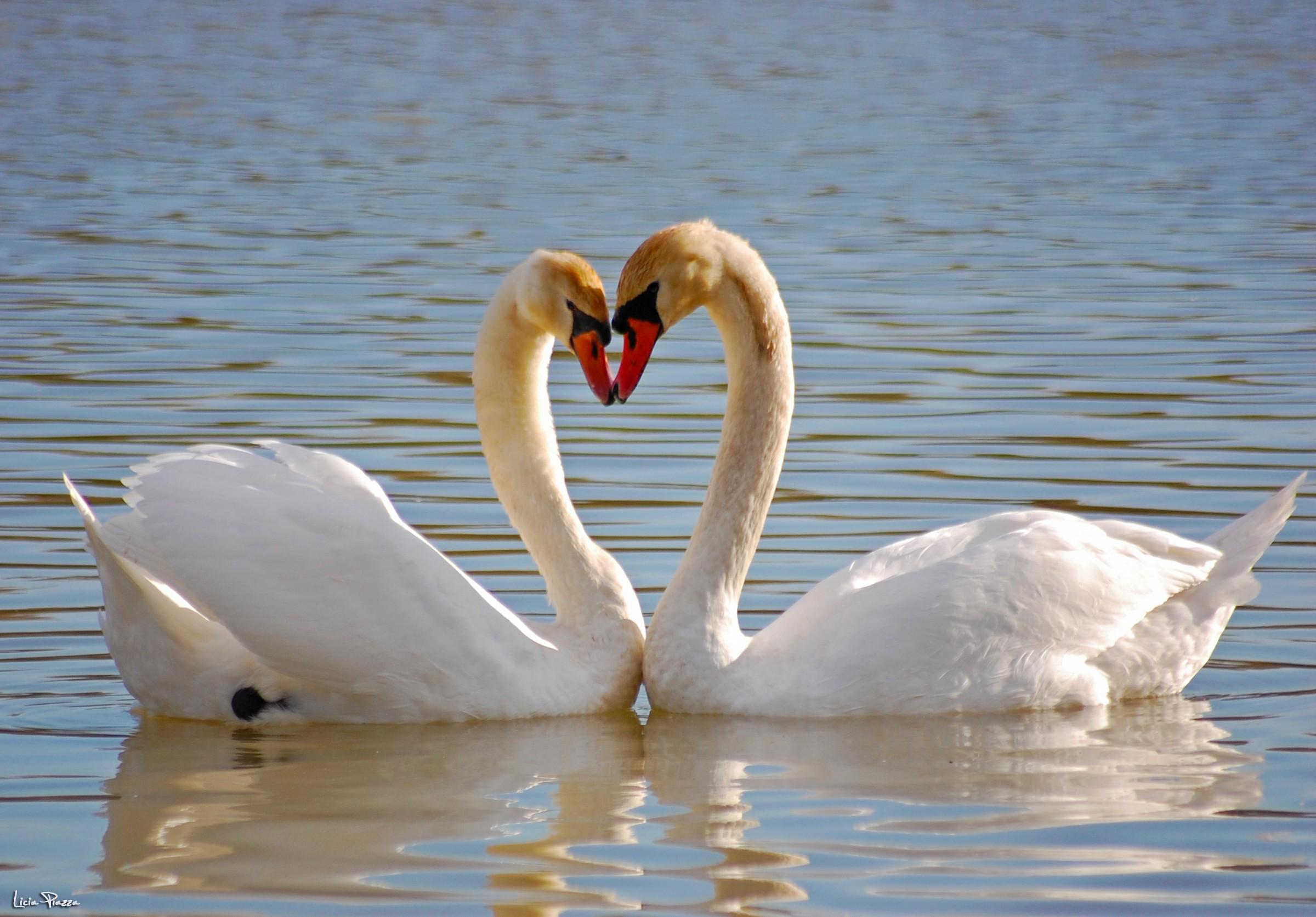 Love!...