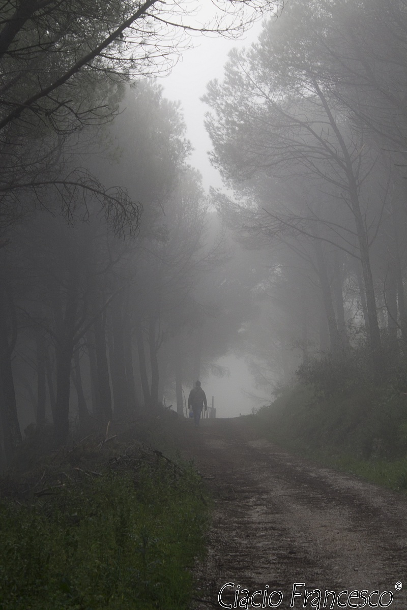 the man in the fog ......
