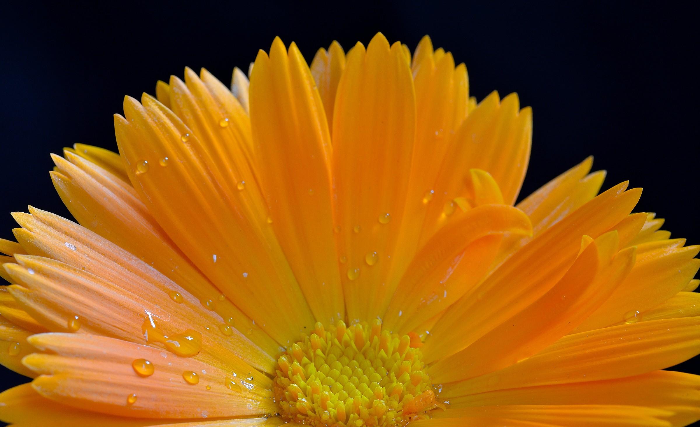 marigold...