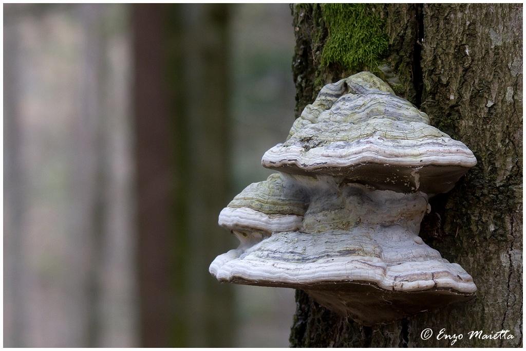 Bayerischer-Wald...