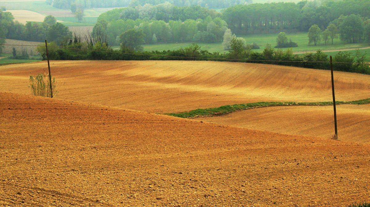 La campagna nel Monferrato...