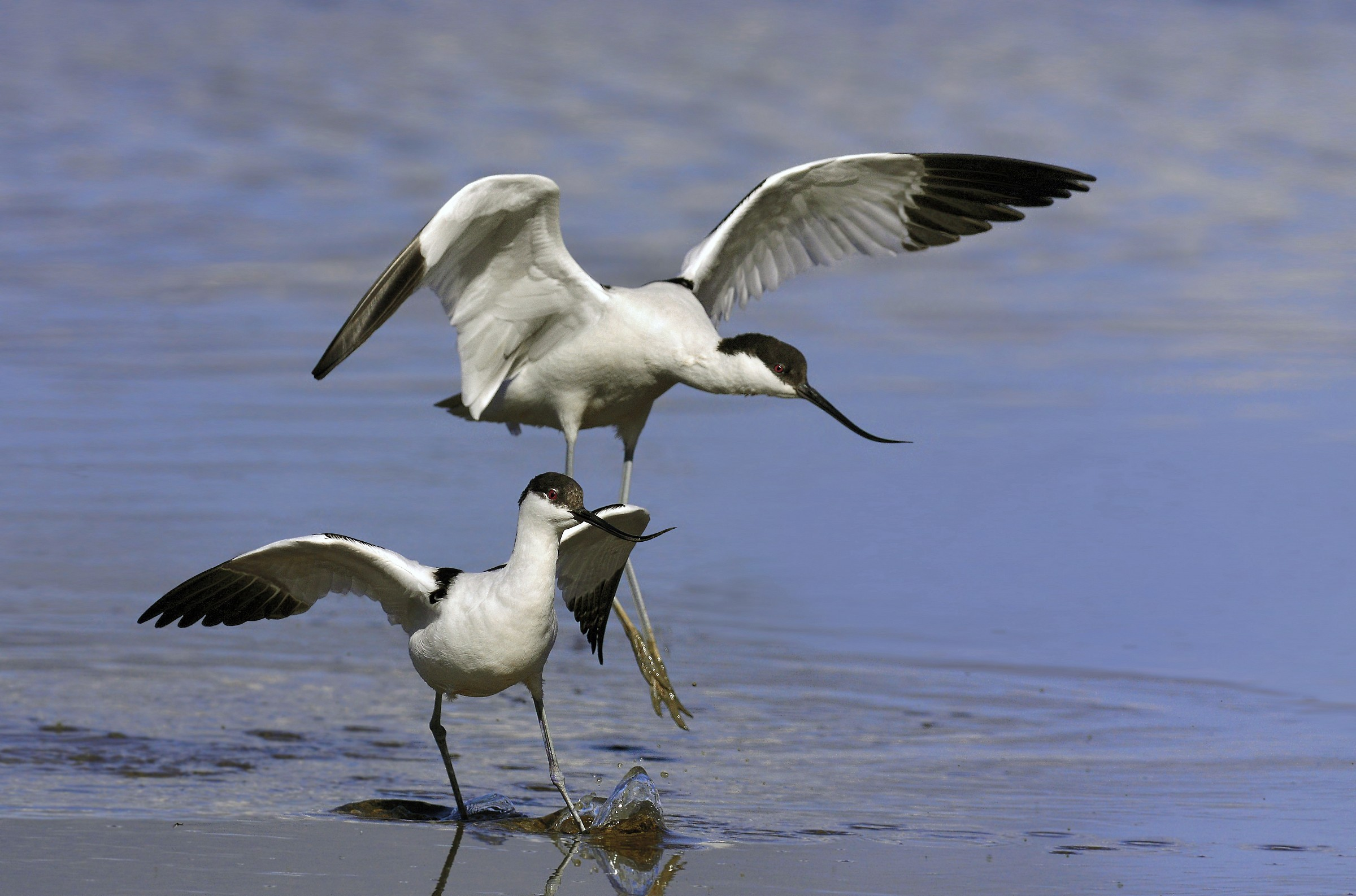avocets coupling failed attempt ......