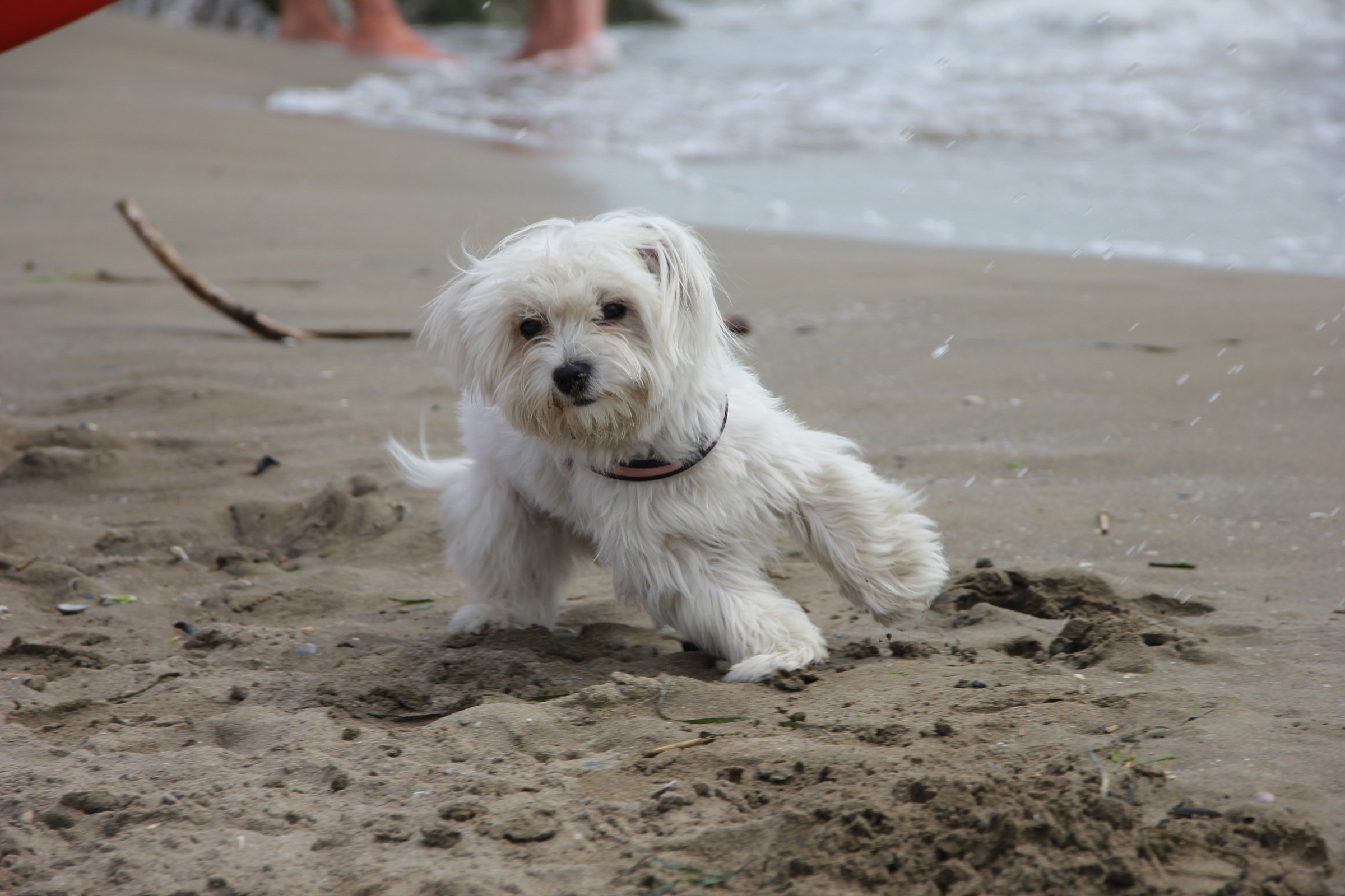 oldies on the beach...