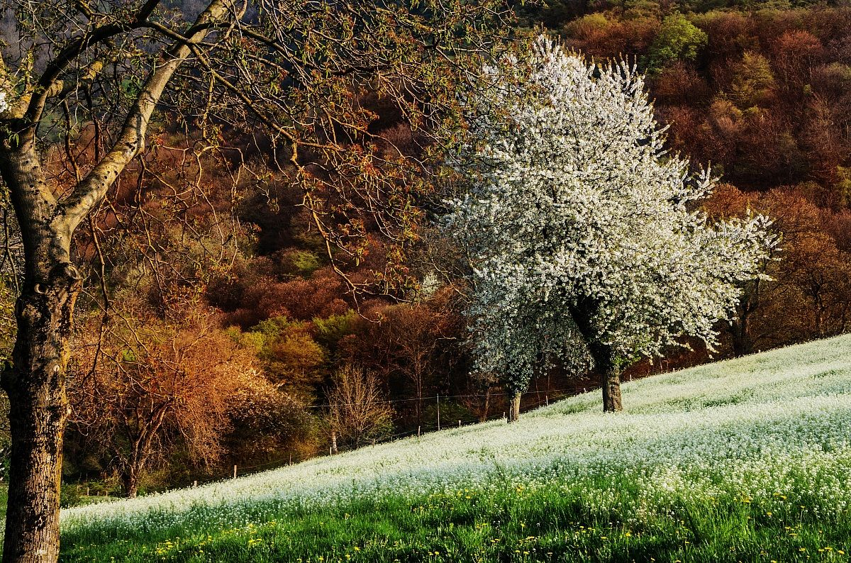 White spring...