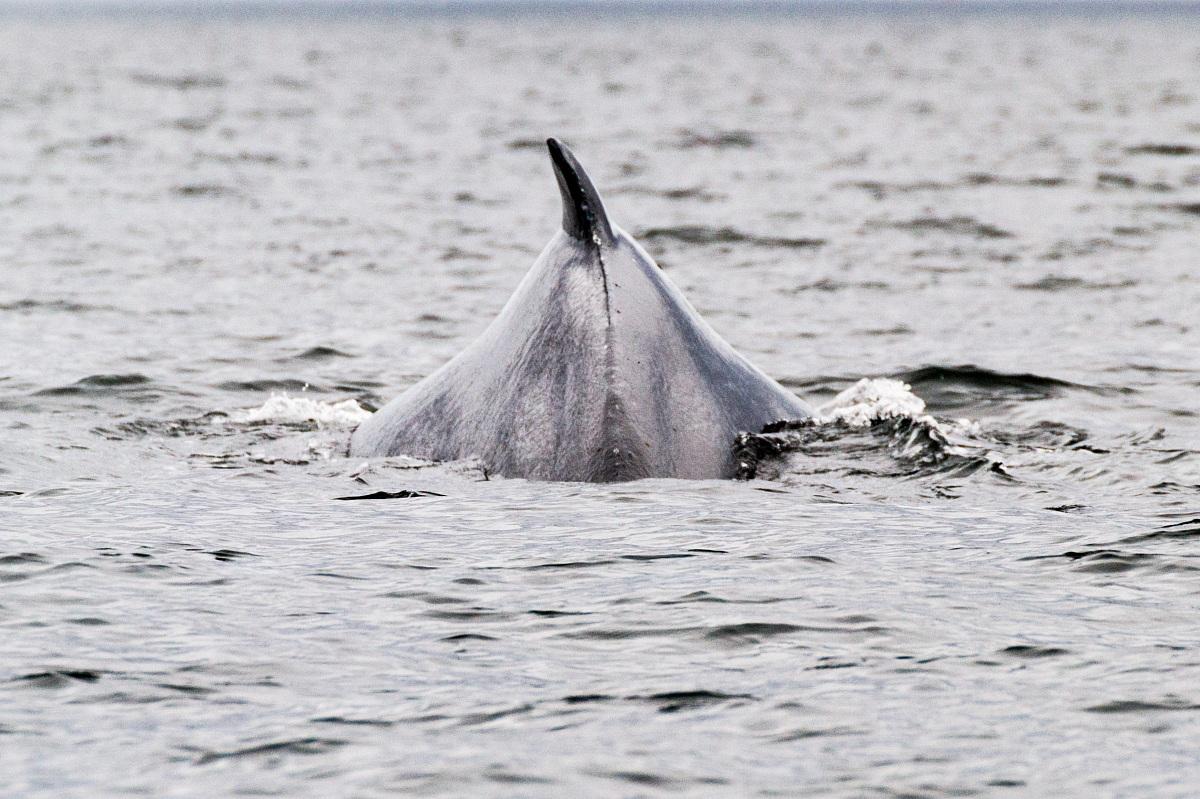 Les baleines...