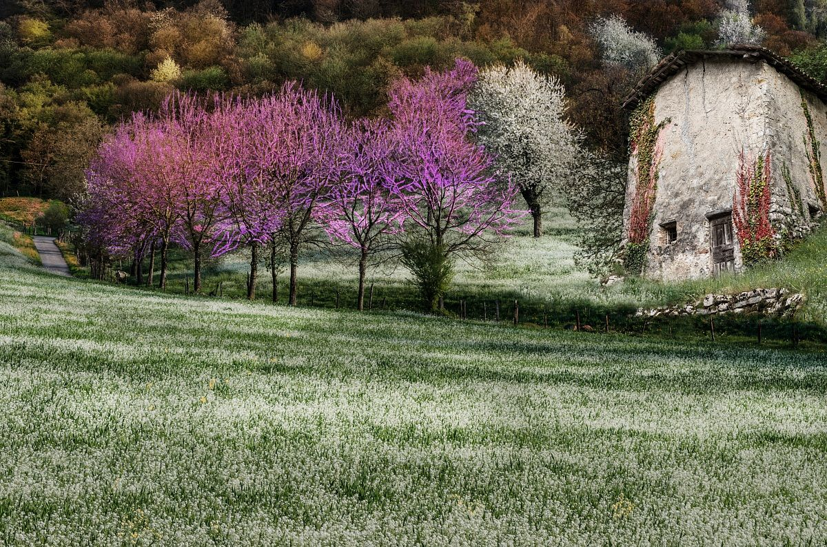 Colors of spring...