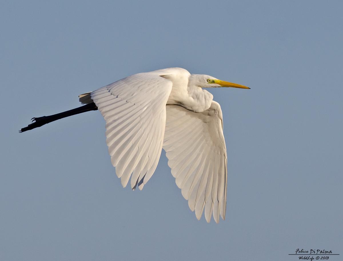 White flight...