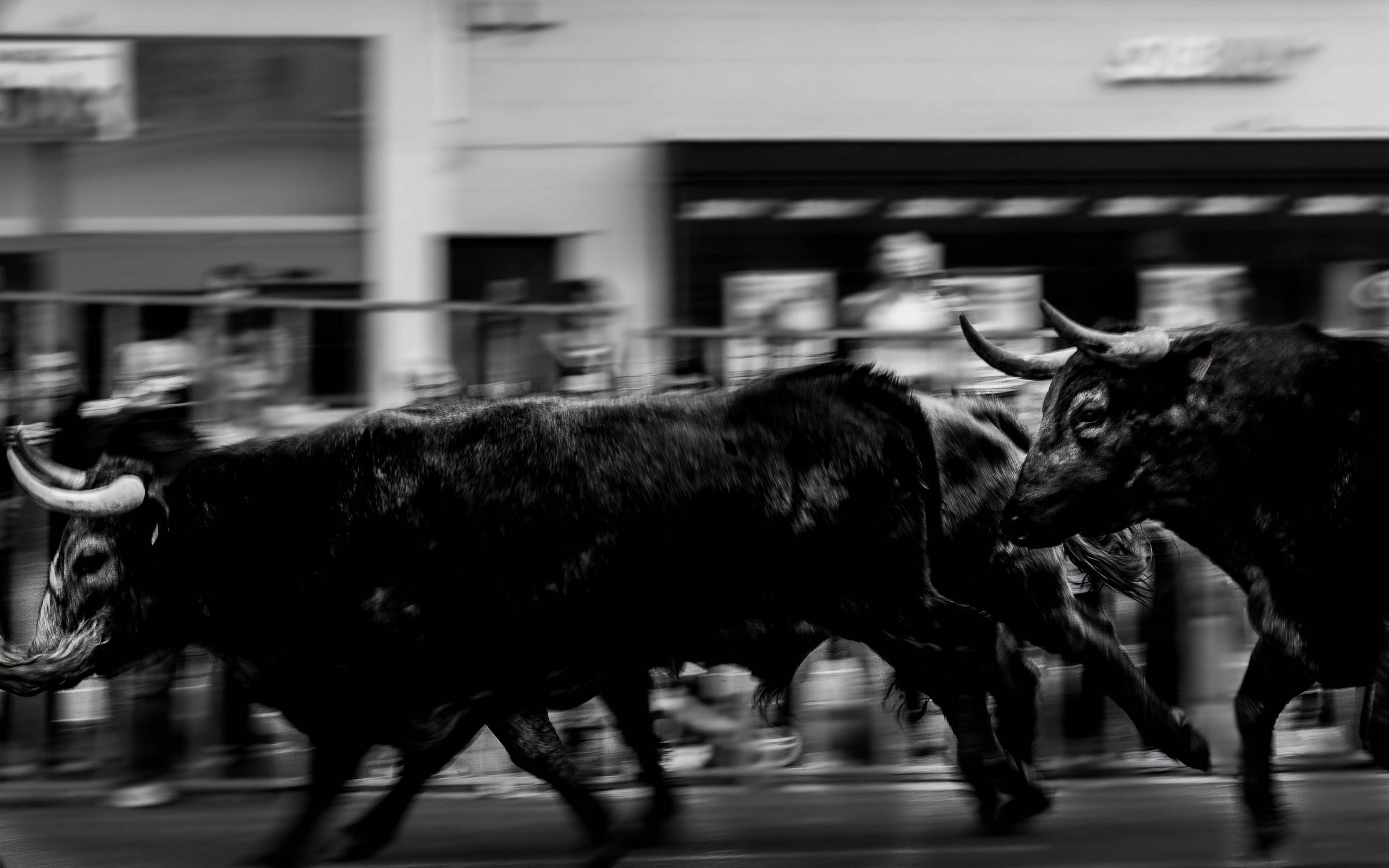 Corsa dei tori...