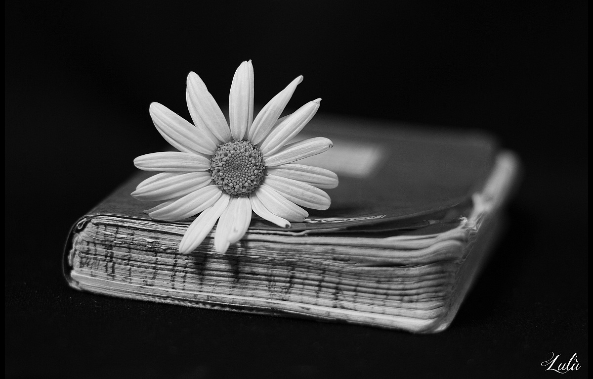 Daisy and thoughts...