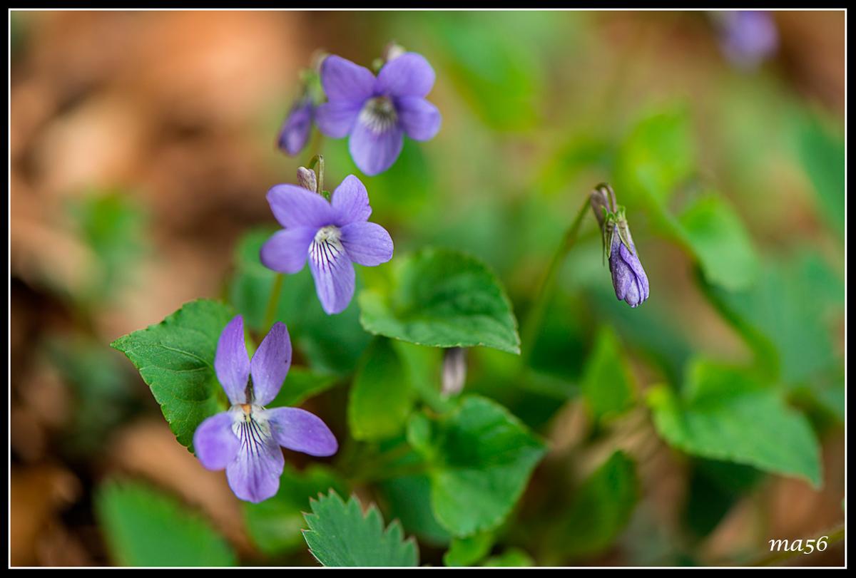 purple wild...