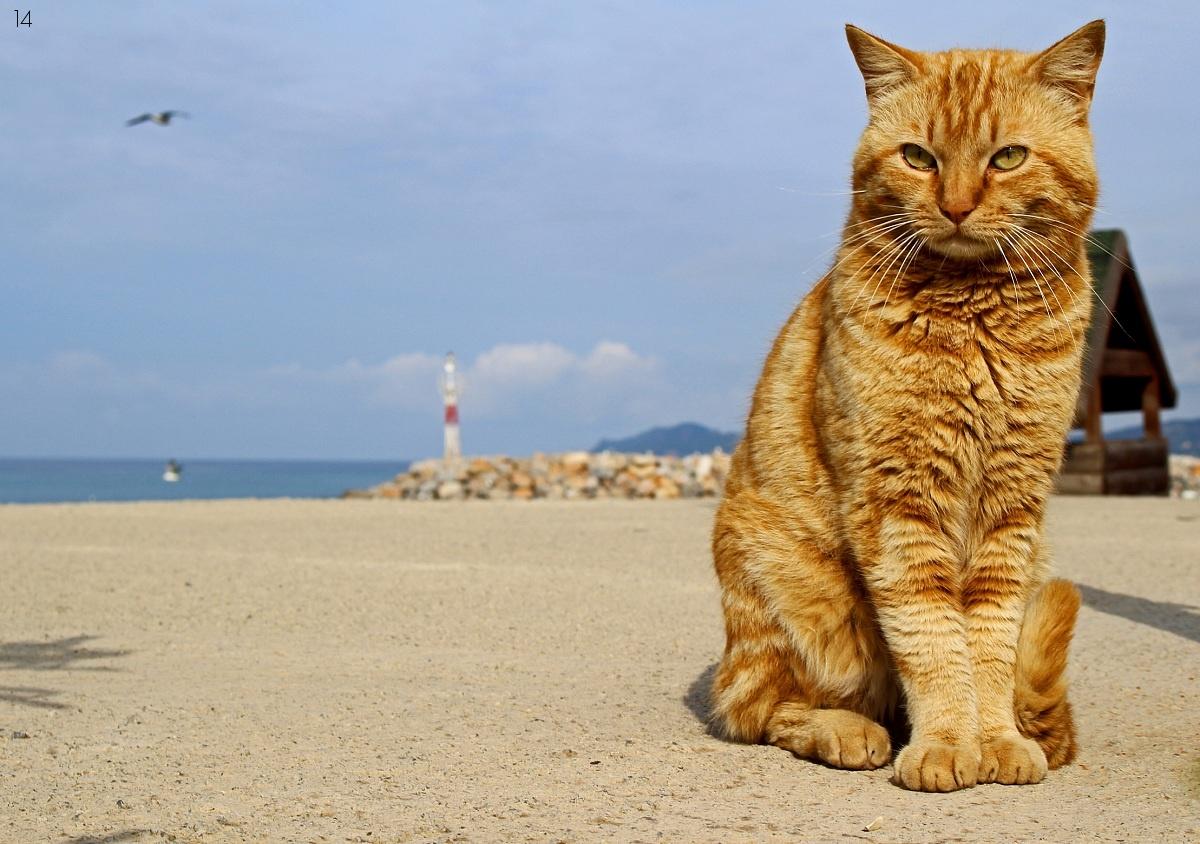 big cat at the port...
