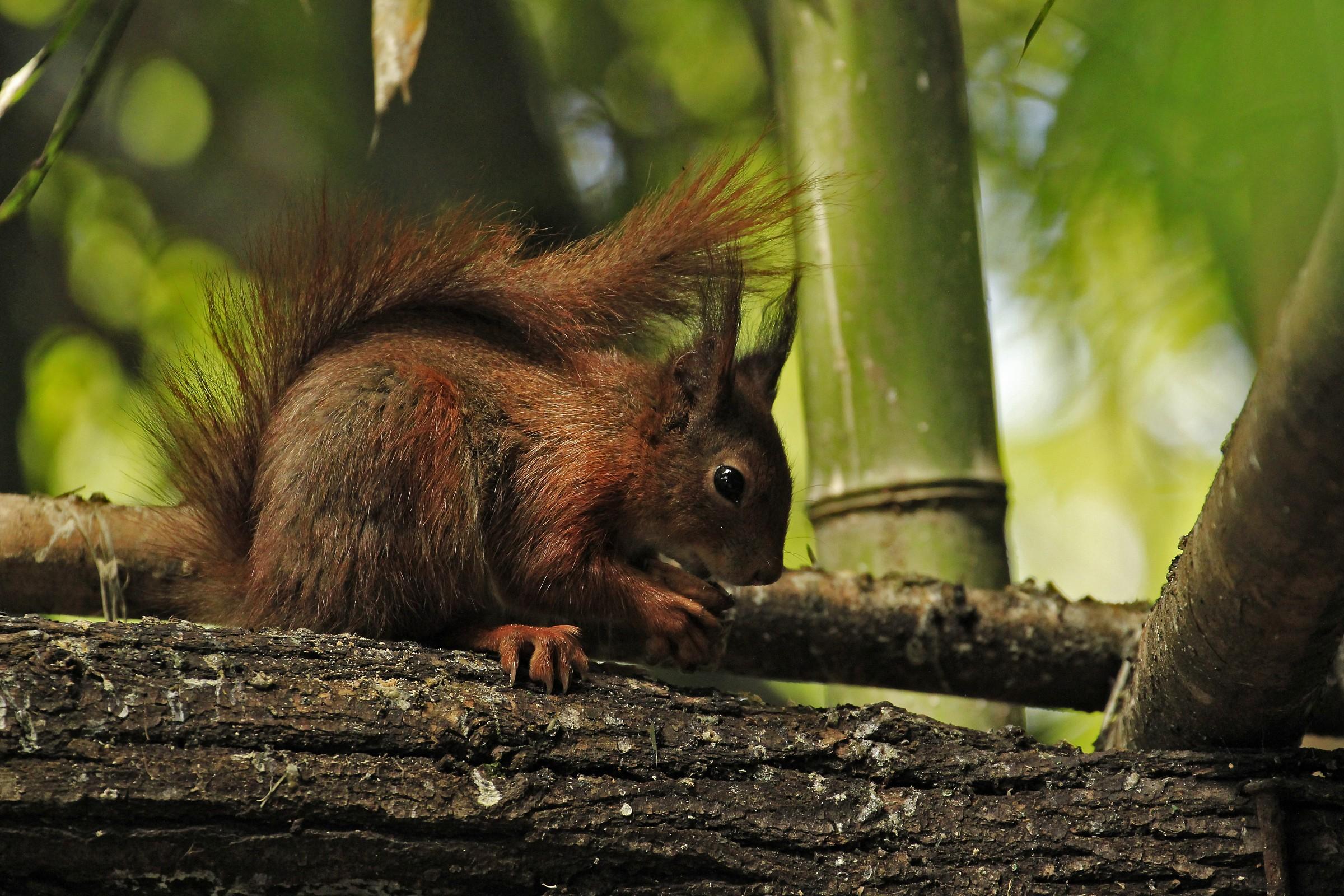 greedy squirrel...