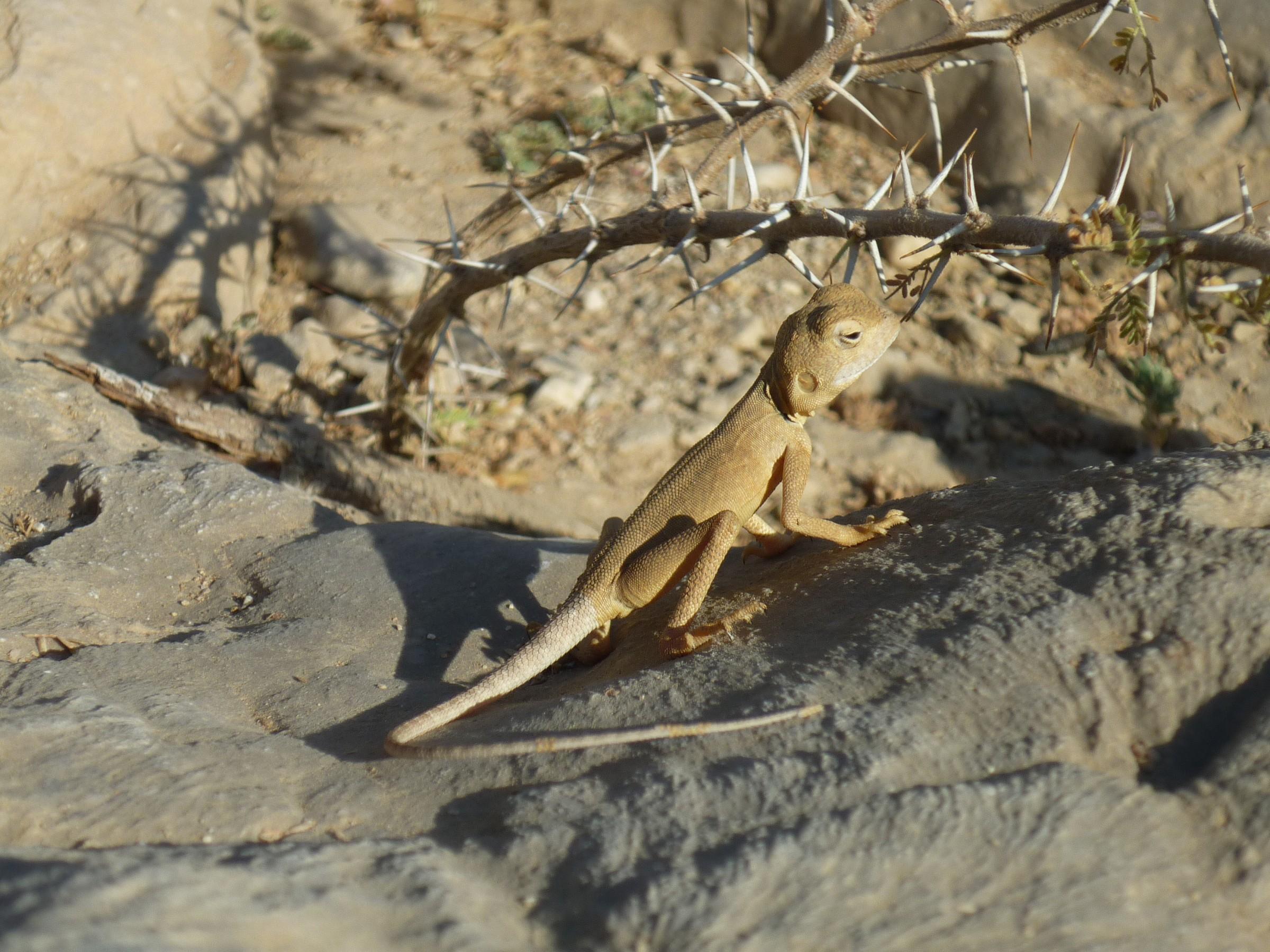Curious reptile....
