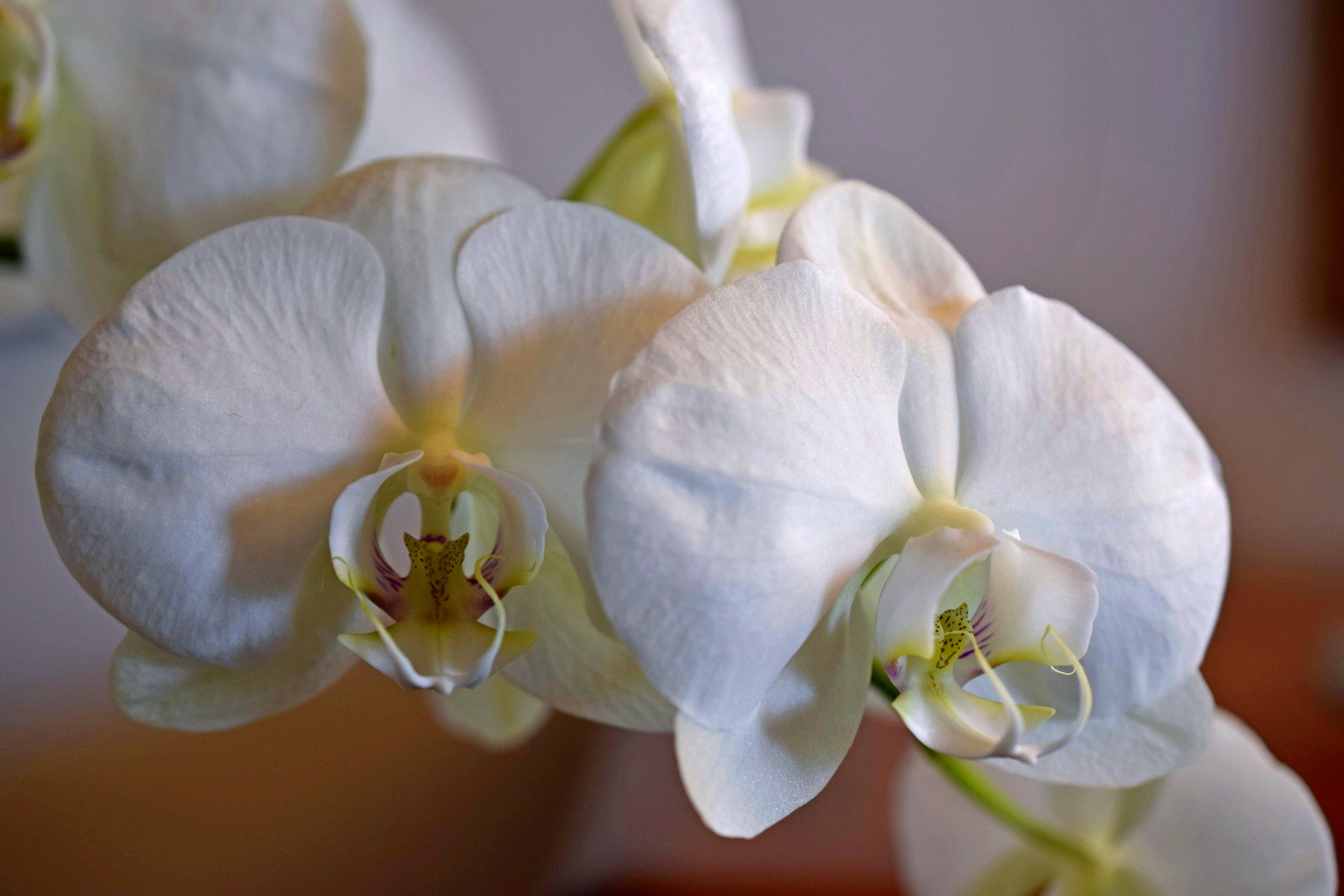 Grandma's Flowers...