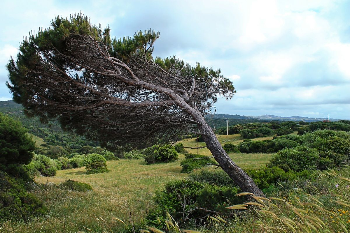Combed by wind...