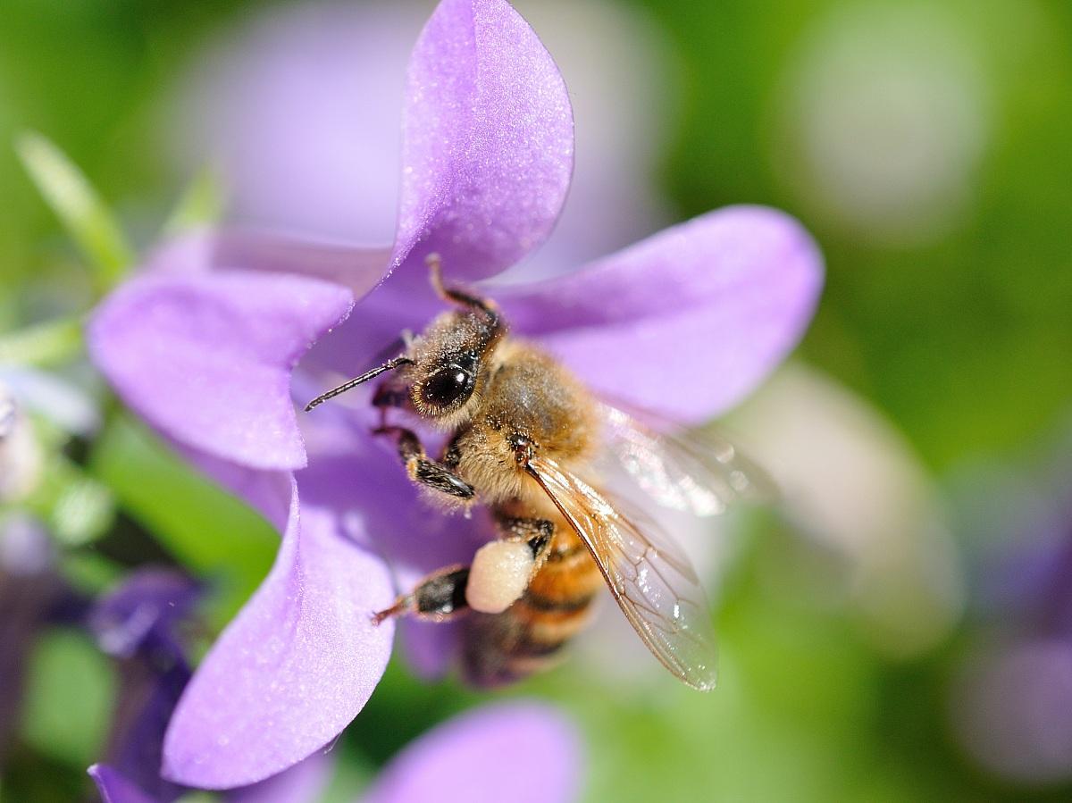 full of pollen...