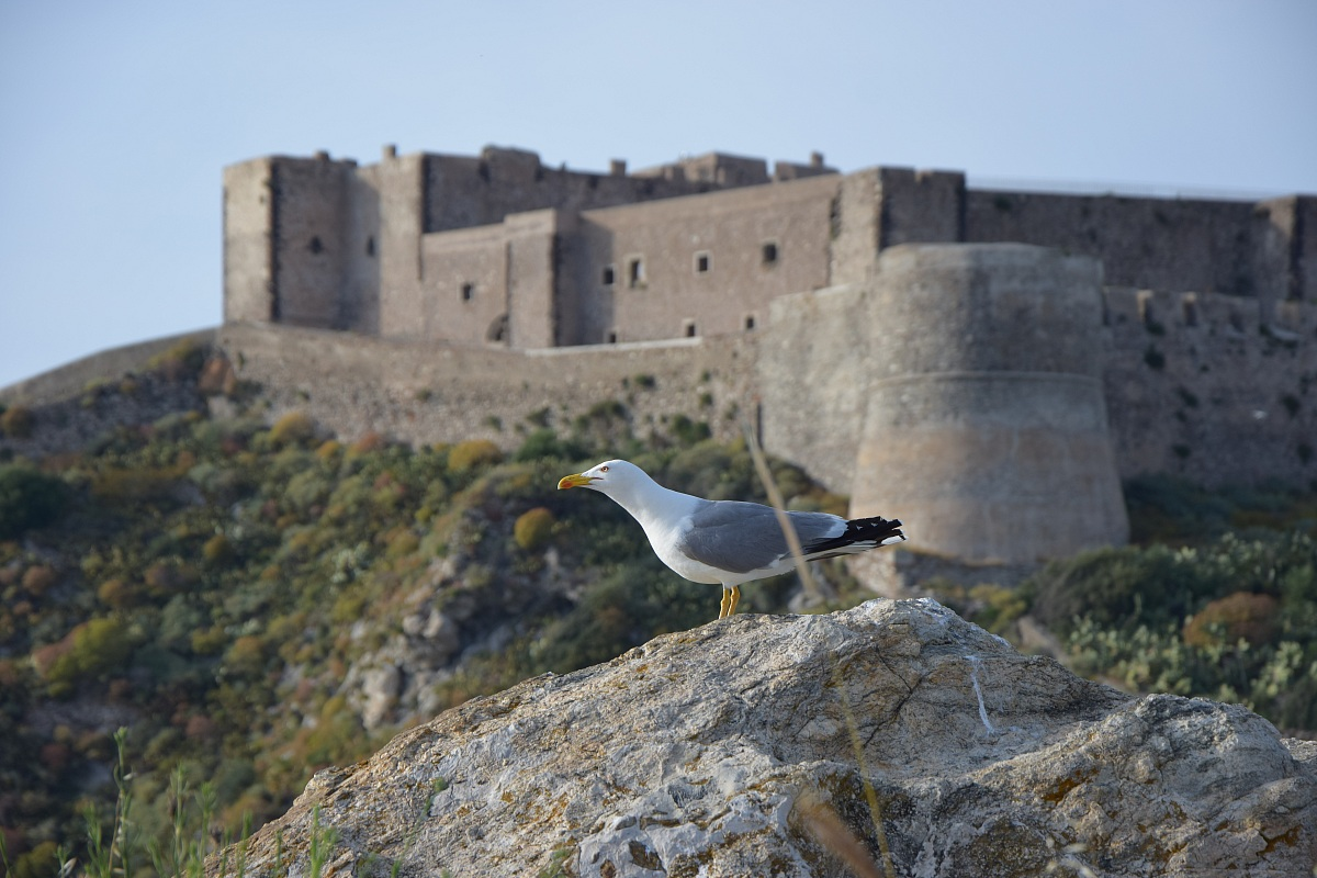 Seagull background castle...