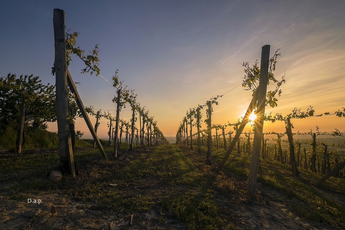 Langhe: the sun in the vineyards...