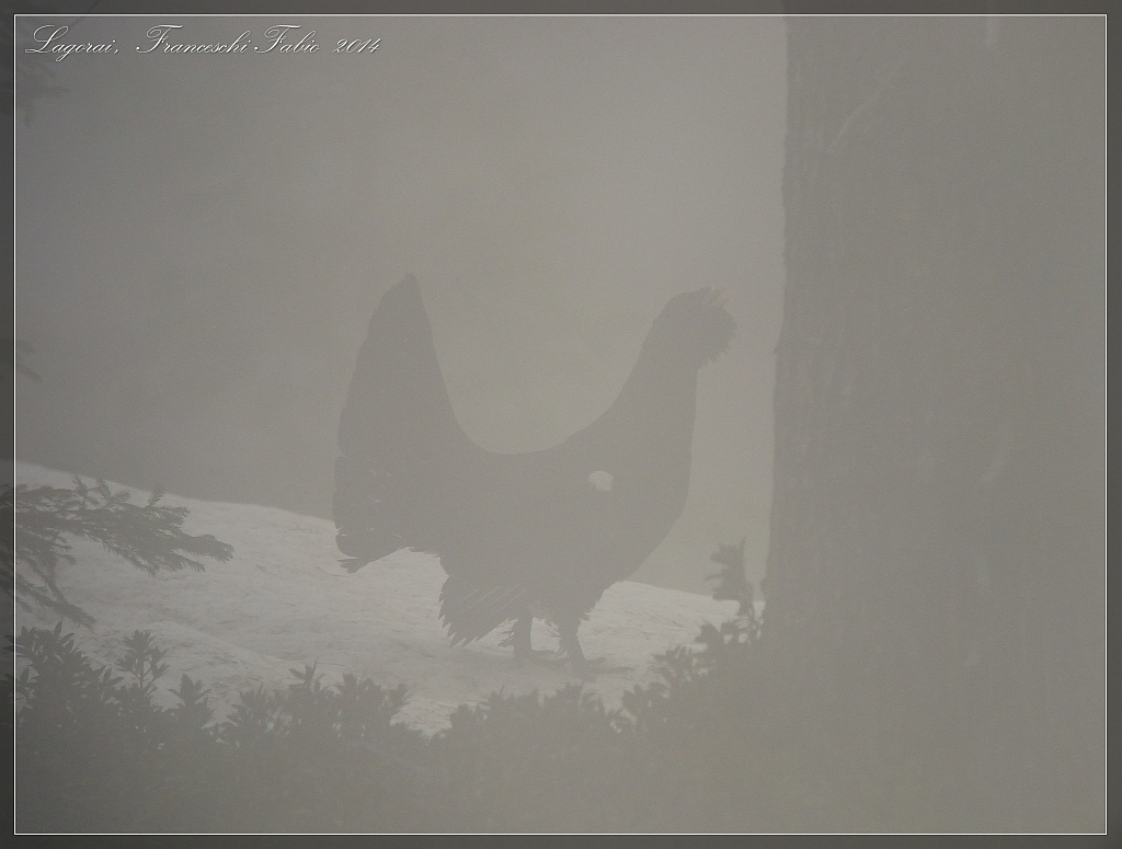 Grouse in the fog!...