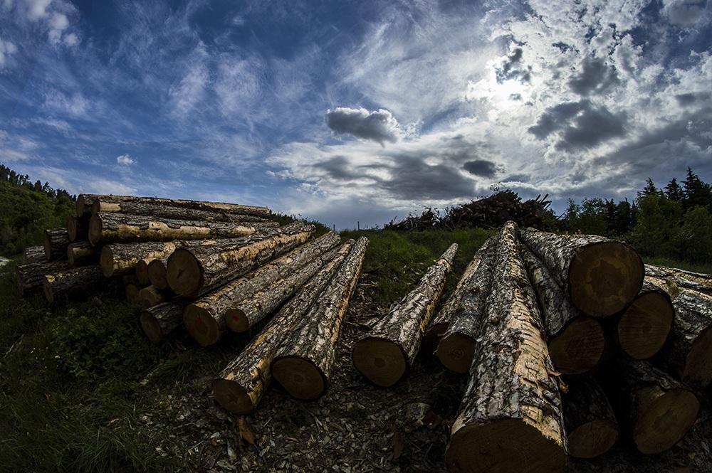Deforestation...