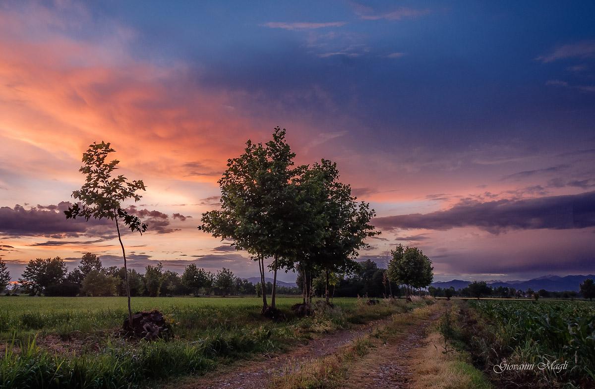 Campi al tramonto...