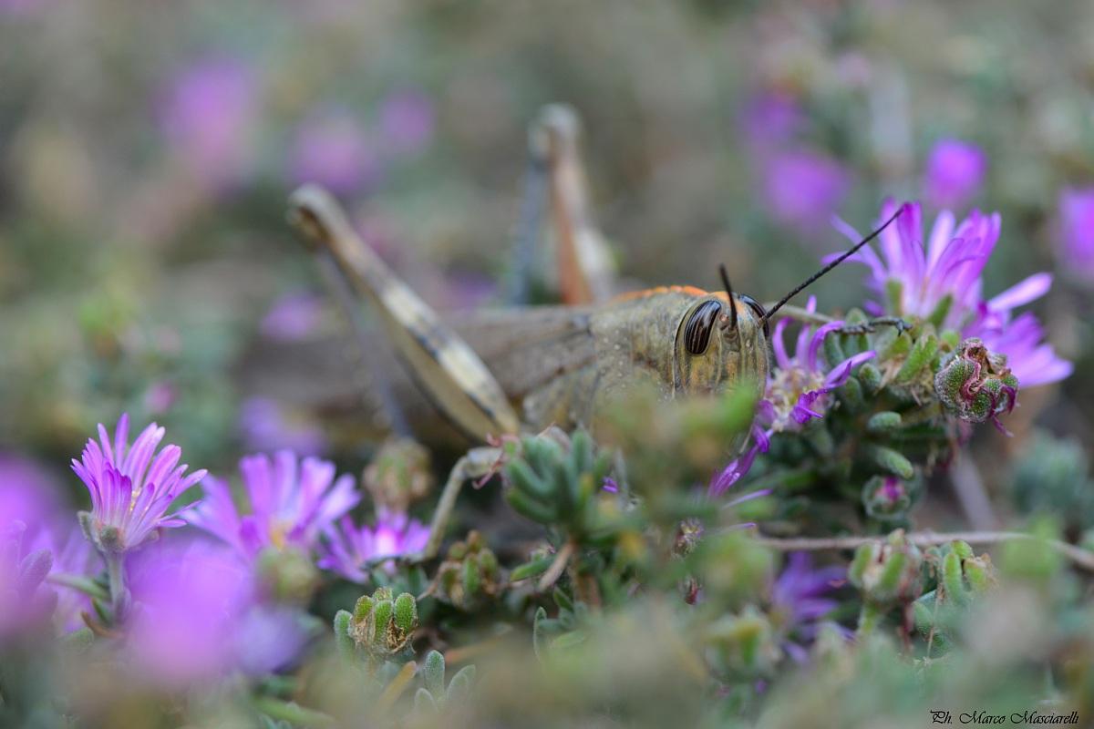Grasshopper...