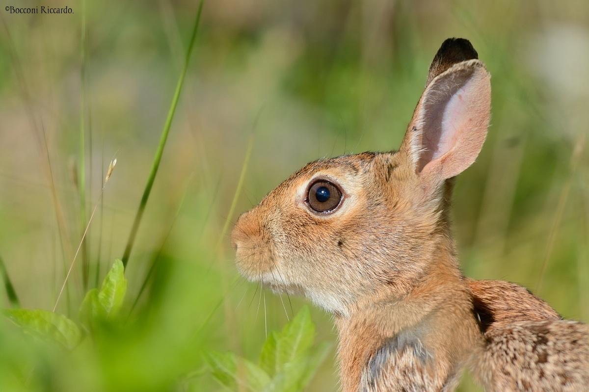 Hare....