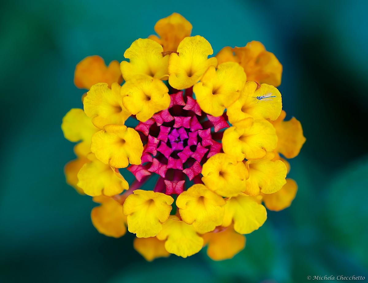 Multicolors...