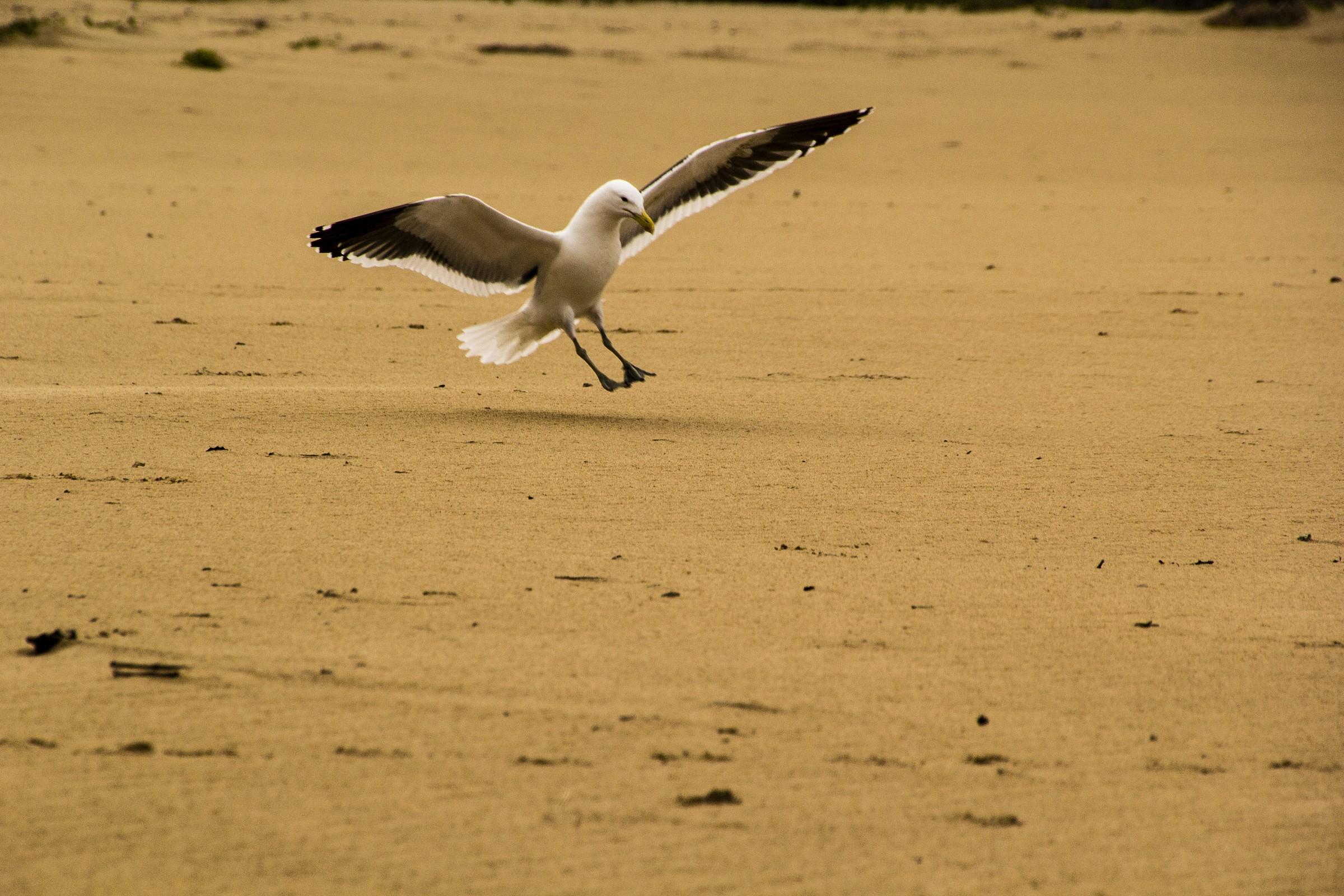 Ready for landing ......