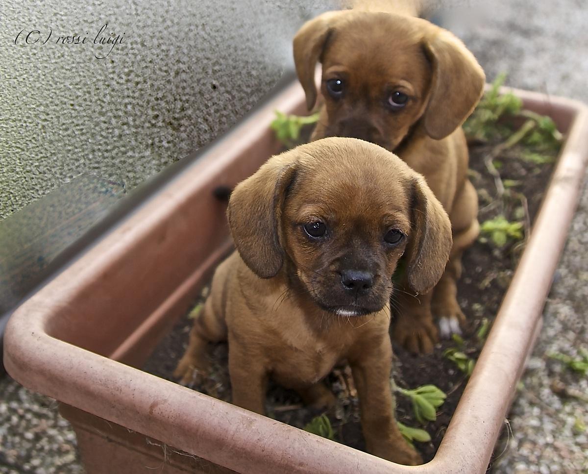 buongiorno siamo i nuovi giardinieri...