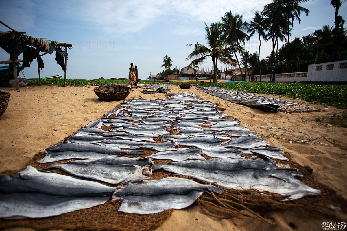 Negombo Fish...