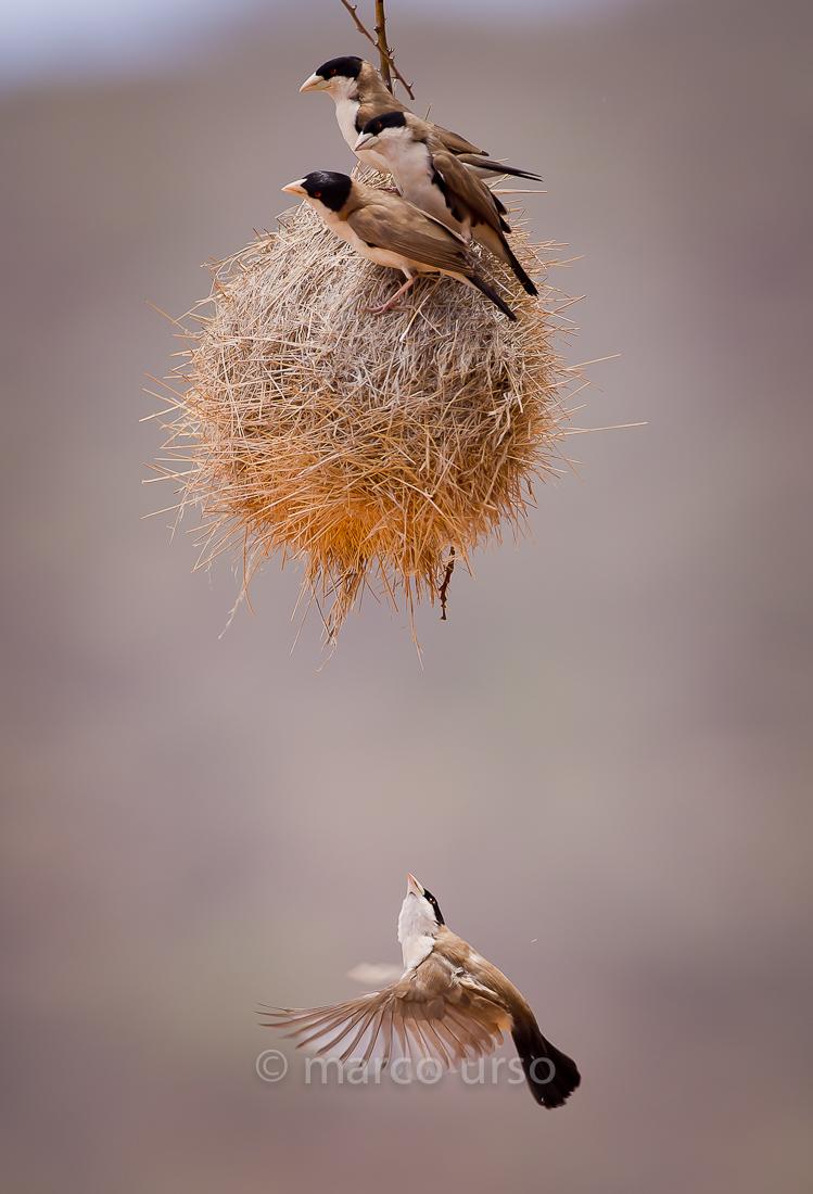 Is there room for me? - Samburu Park Kenya...