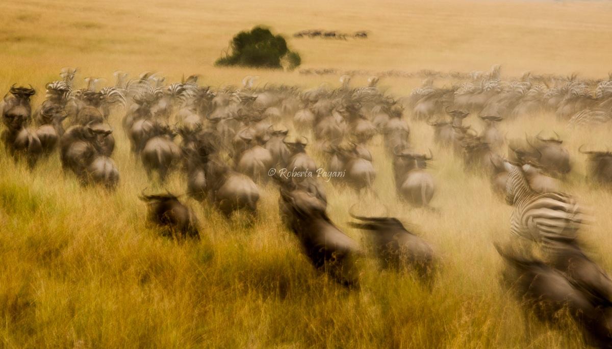 La grande migrazione...