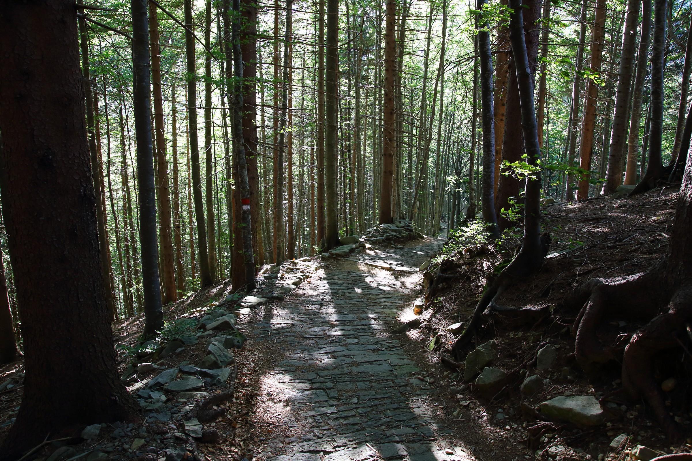 Scenic trail...