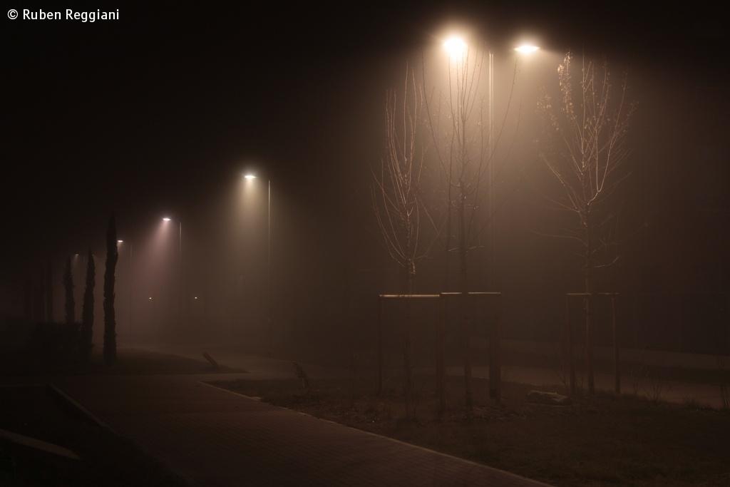 A foggy evening behind the house....