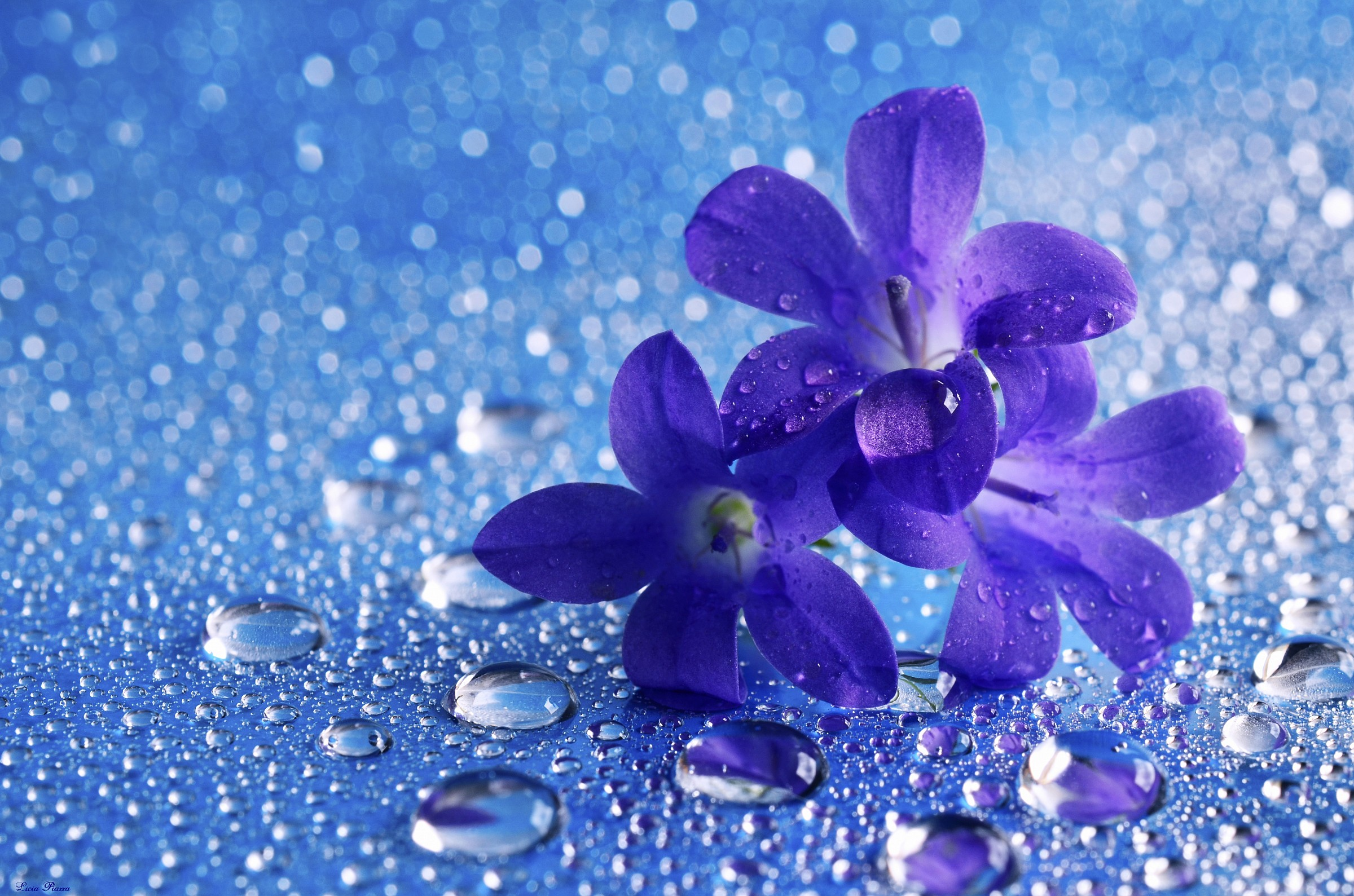 Blue flower...