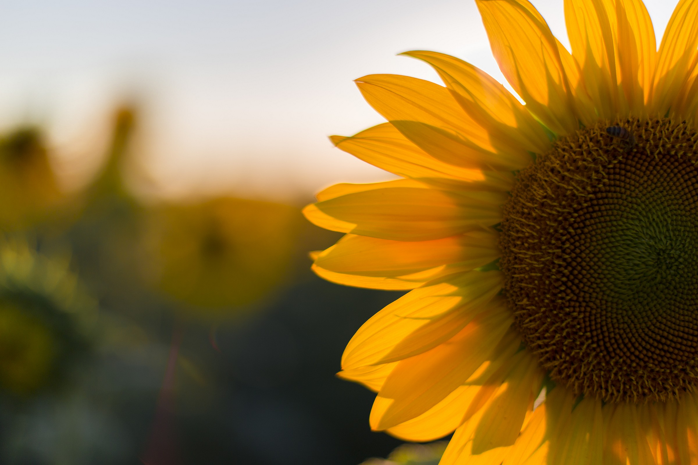 against the sun (bee shade)...