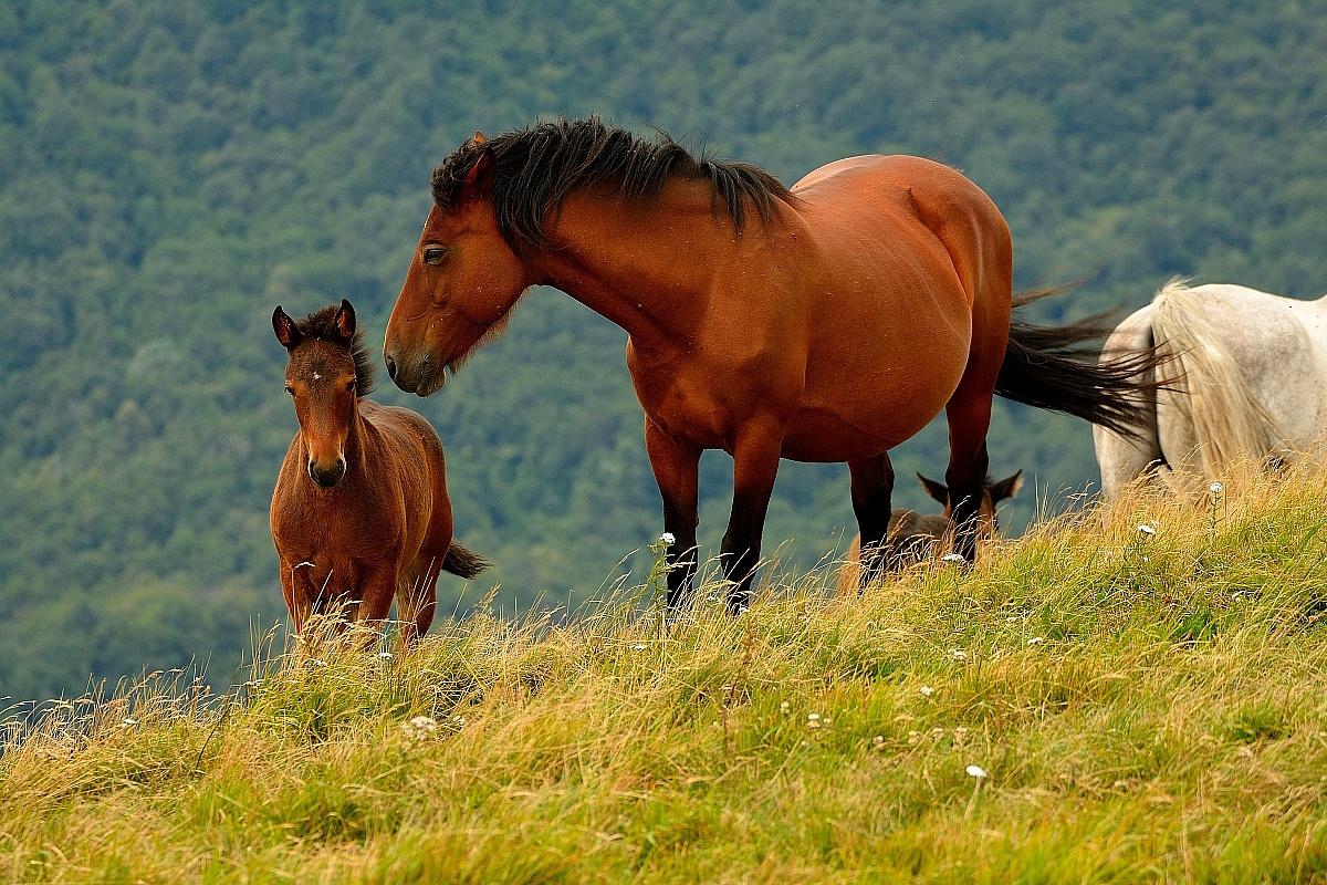 Cavalli in piena libertà...