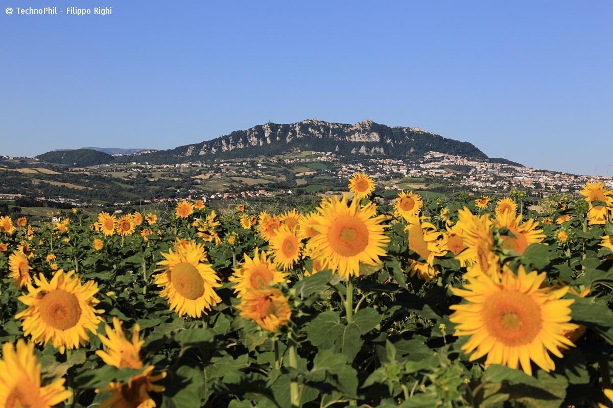 Sunflowers & San Marino!...