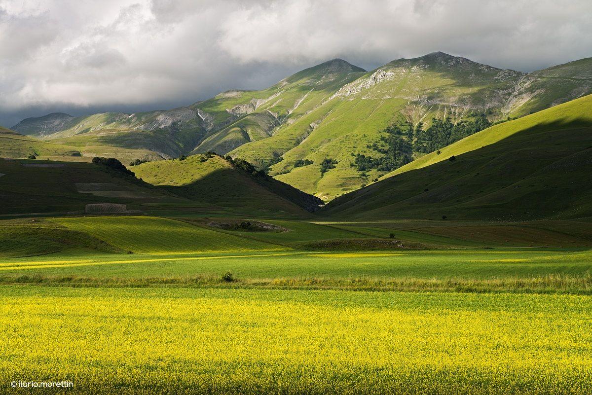 Green and gold ... as the Selecao Brasileira...