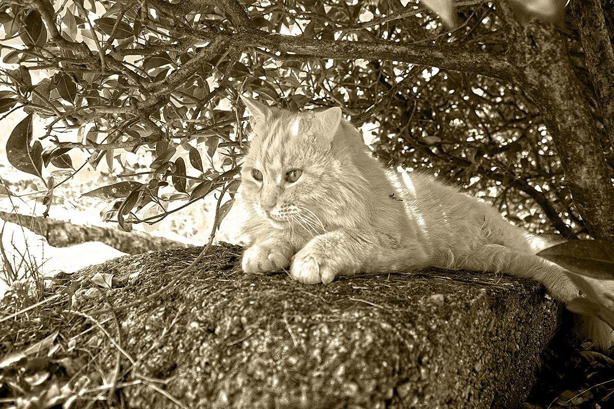 il gatto all'ombra dell'eternità......