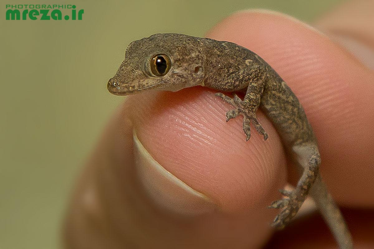A little lizard...