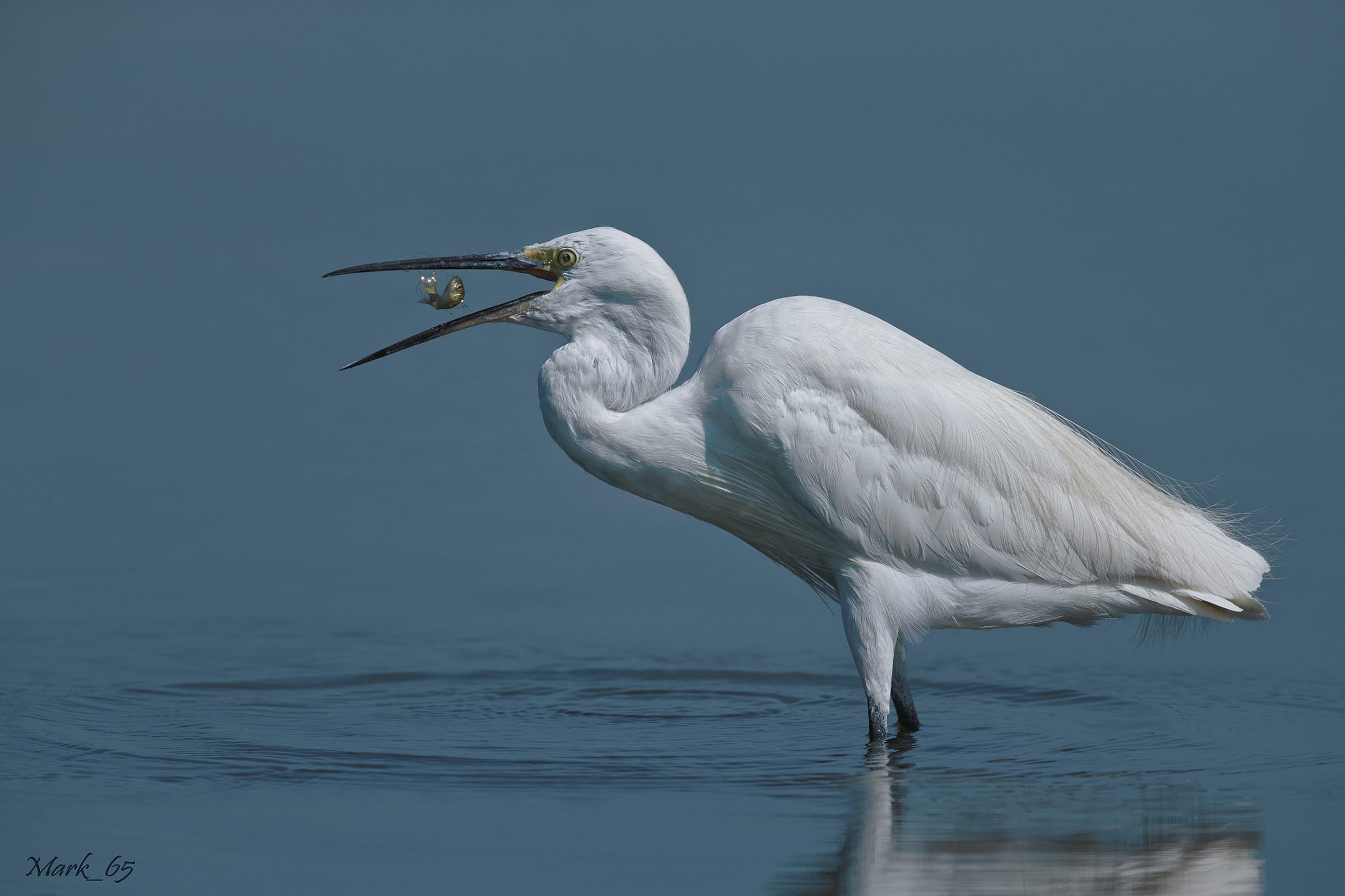 Egret...