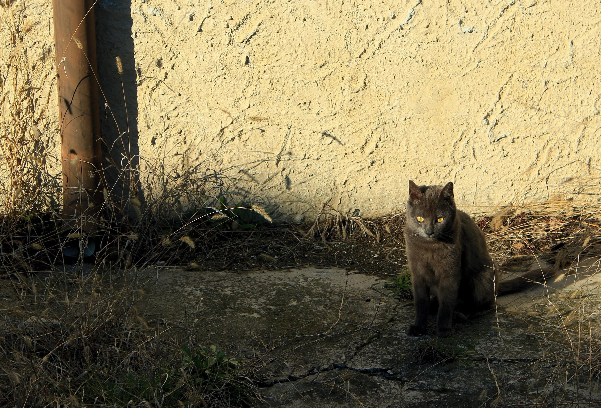 jack the cat...