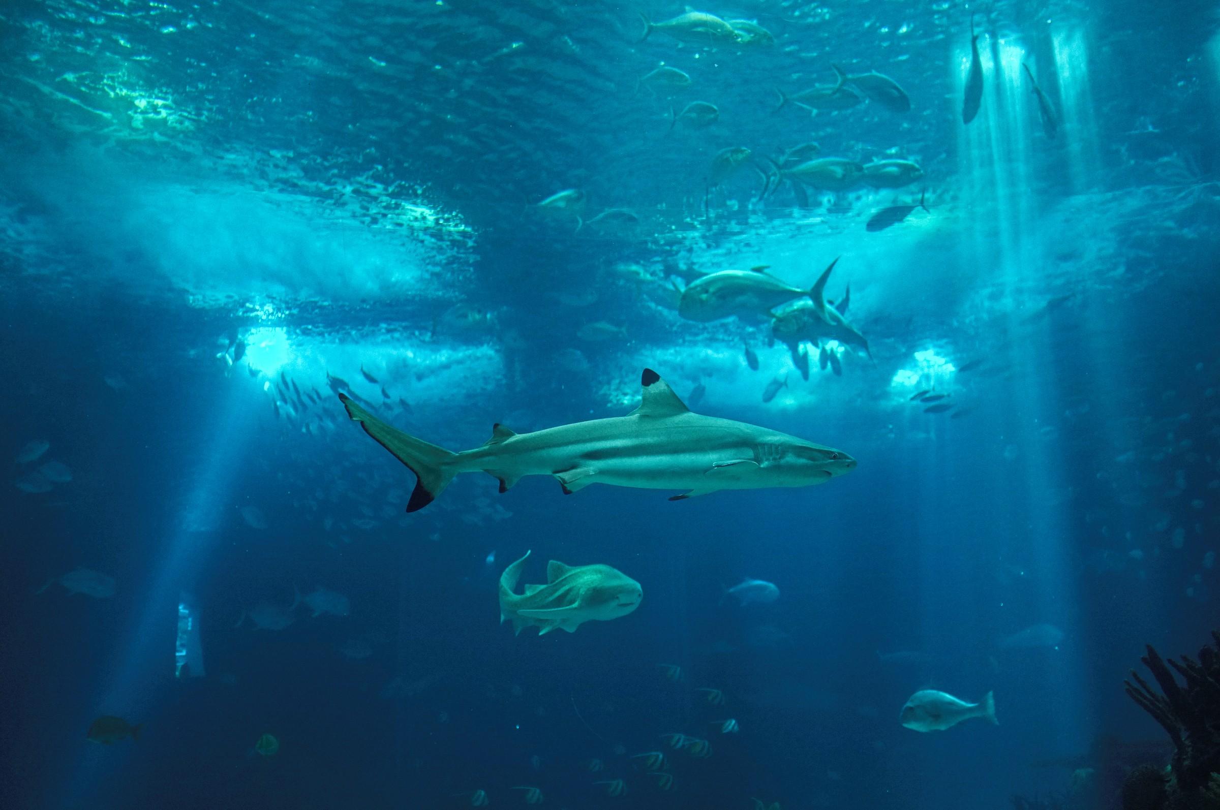 Oceanarium...