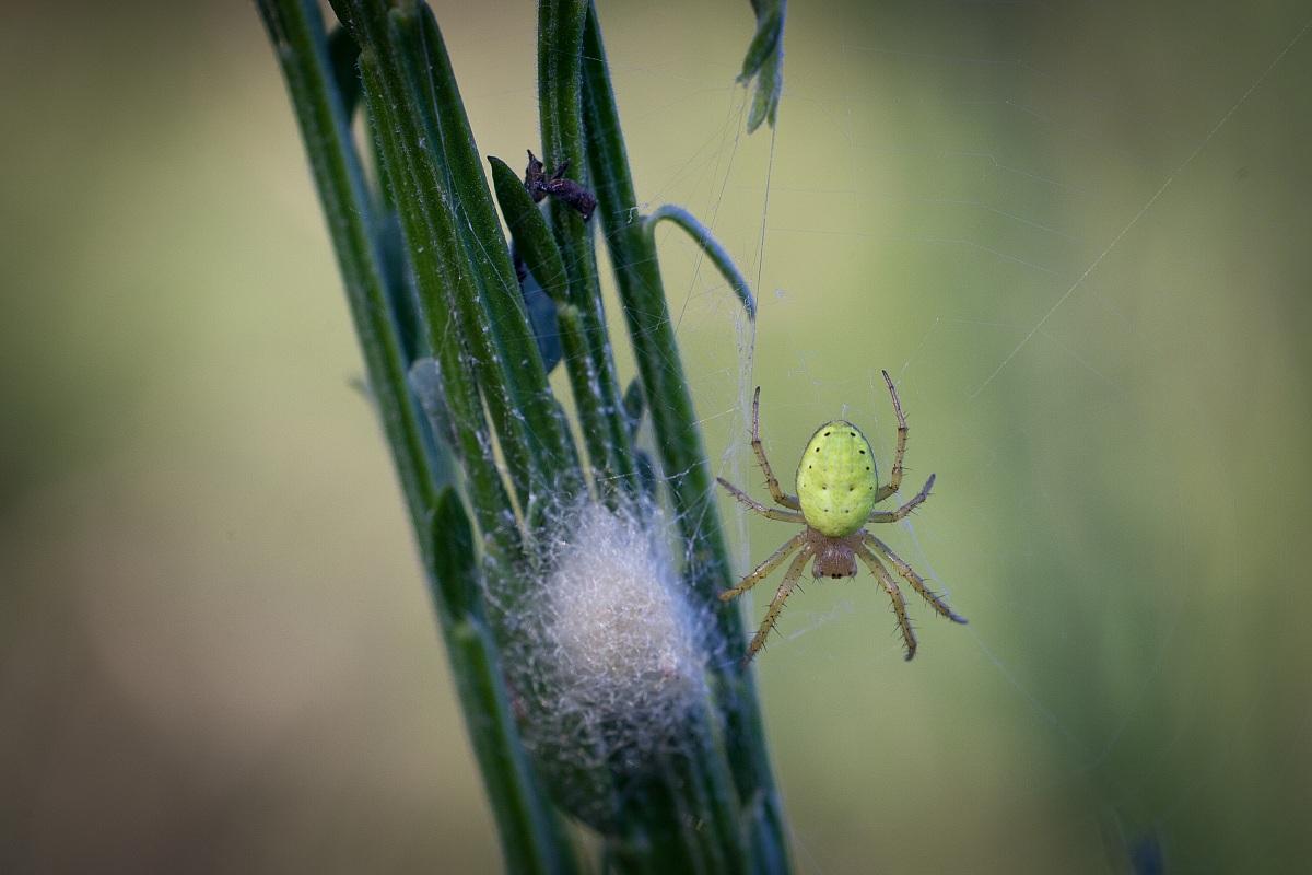 Itsy Bitsy Spider ......