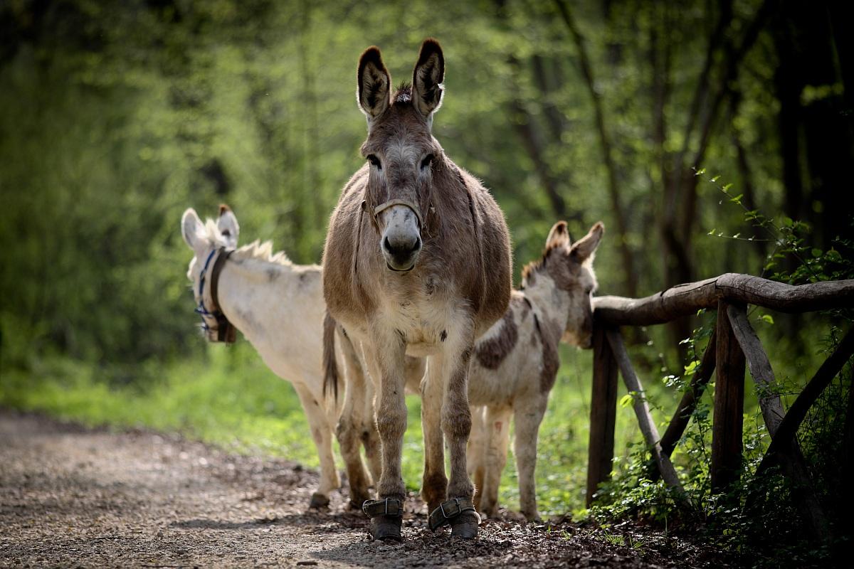 donkeys...