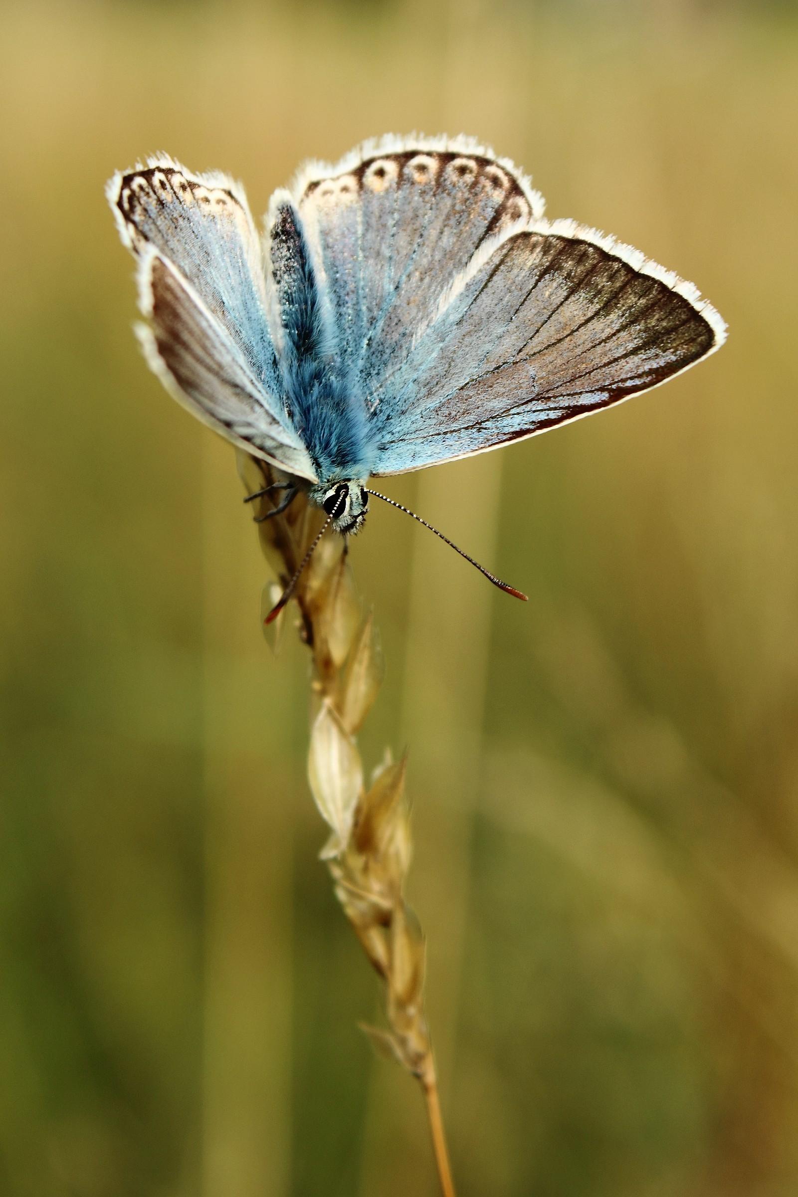 La mia prima farfalla...