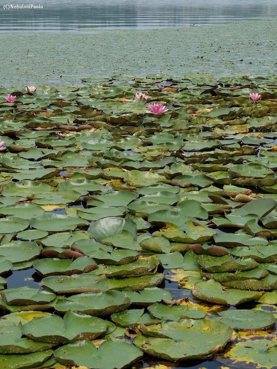 lago di Comabbio VA...