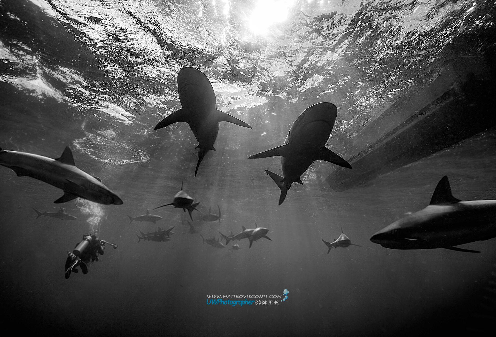 sharks hideway...